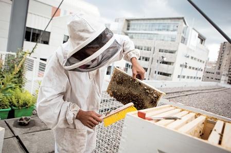 Le rucher collectif du CRAPAUD est à la recherche de  3 nouveaux membres