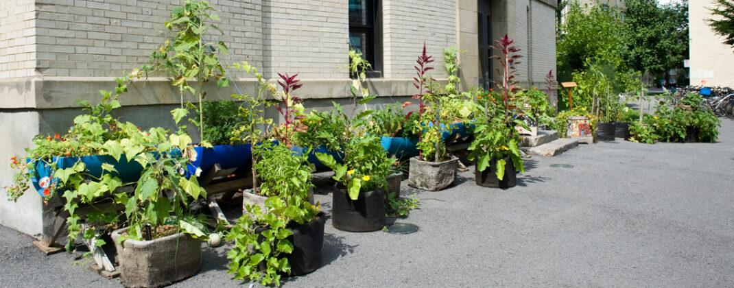 Découvrez les jardins collectifs du CRAPAUD